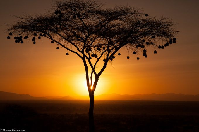 Light through tree by FledgelingImages - Silhouettes Of Trees Photo Contest