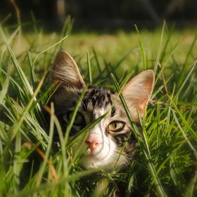 Romping and hiding in the long grass.