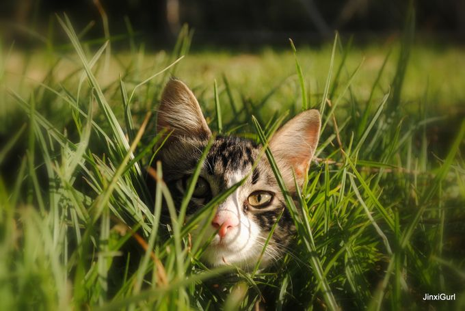 I see you by JinxiGurl - Cute Kittens Photo Contest