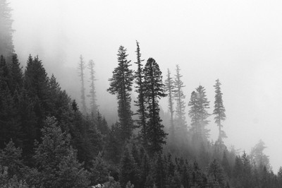 pine peak