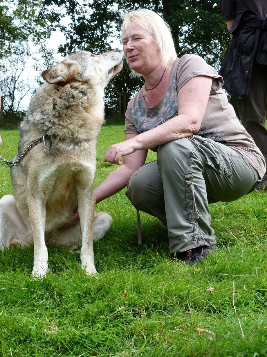 She was a beautiful wolf, to stare into a wolf's eyes is an amazing moment and to then receive a kiss!! A life highlight
