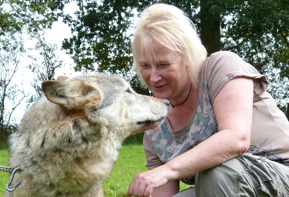 Taken on a wolf walk a few years ago, one of the best times ever to get a kiss from a wolf. Sadly she is no longer with us but she was a true wolf ambassador.