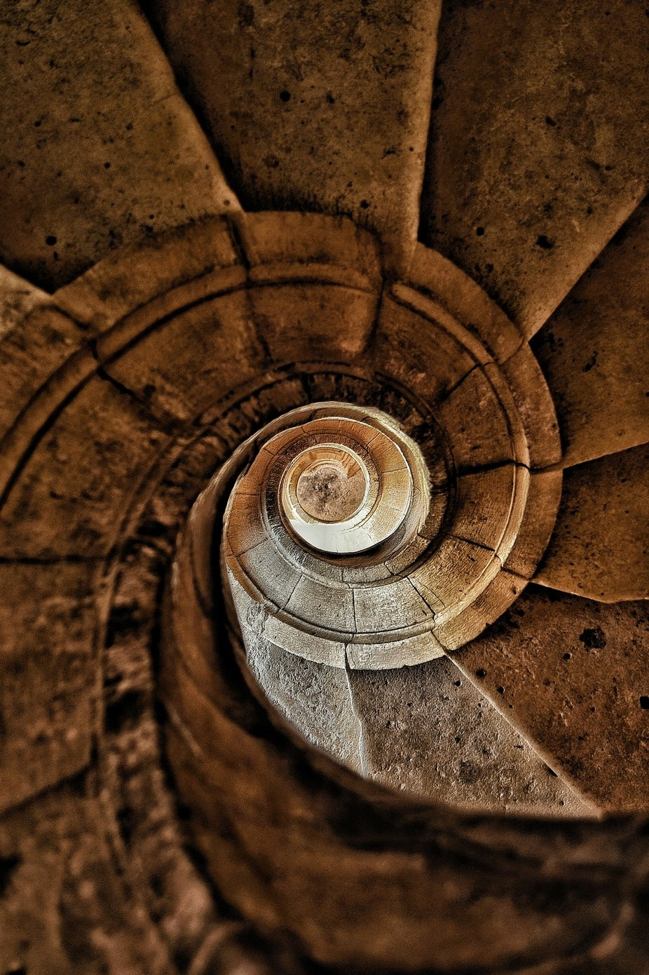 Snail by MiguelMartins - Spirals And Composition Photo Contest