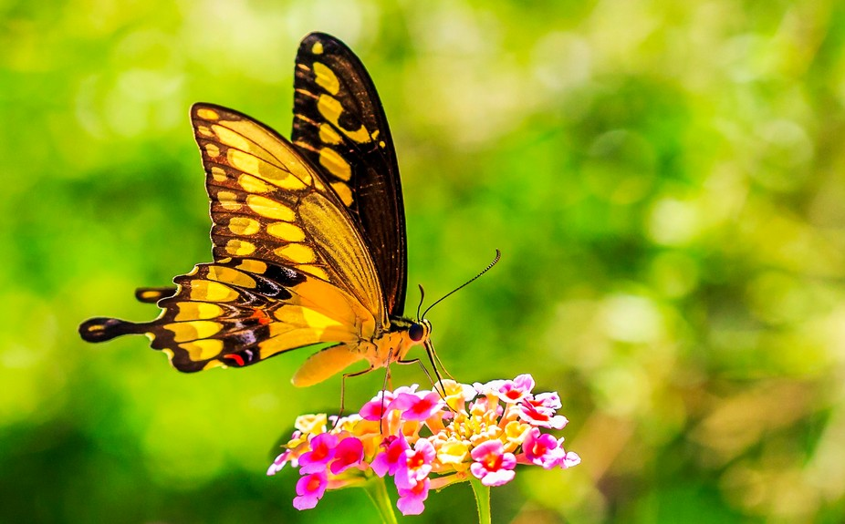 Beautiful butterfly shot that was captured during an afternoon strolling through the wonderful To...