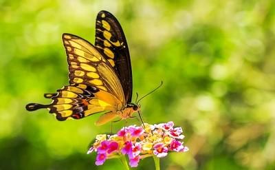 Tohono Chul Butterfly