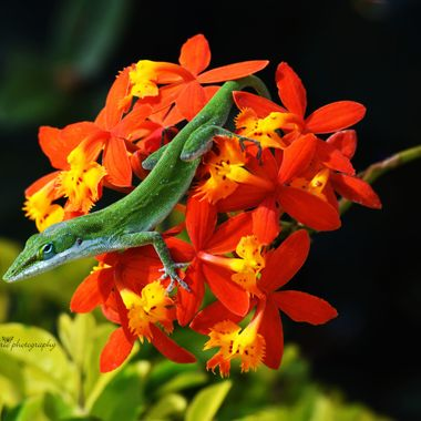 green gecko on ground orchid