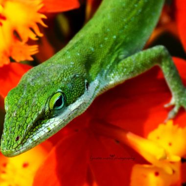 green anole on ground orchid