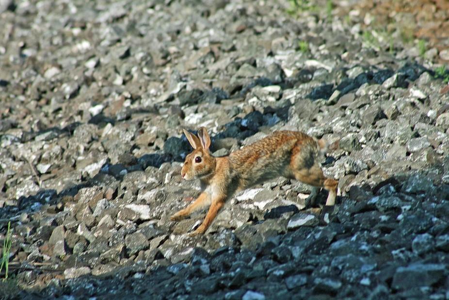 Rabbit 0349