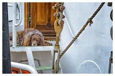 Guarding the boat faithfully