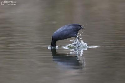 Kopf-unter-Wasser