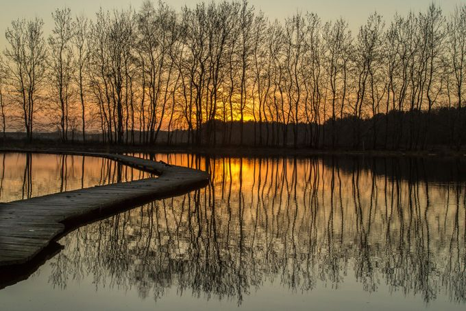 Sunset reflections by alexriemslag - Silhouettes Of Trees Photo Contest