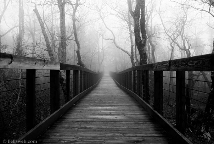 Foggy Walkway: B&W by bellzax - Parallel Compositions Photo Contest