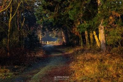 Sunrise Gate