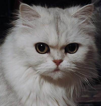 Mehrak, a Persian Princess