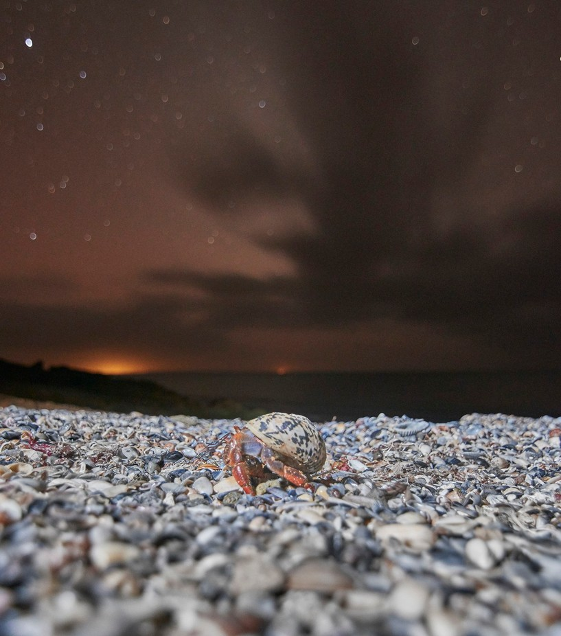 Crustaceous Night by tuliosampayo - Below My Knees Photo Contest