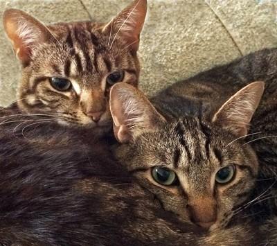 Kelly's Kittens