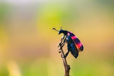 Top of The World  -  Beetle bug