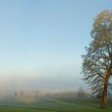 Big Tree Fog