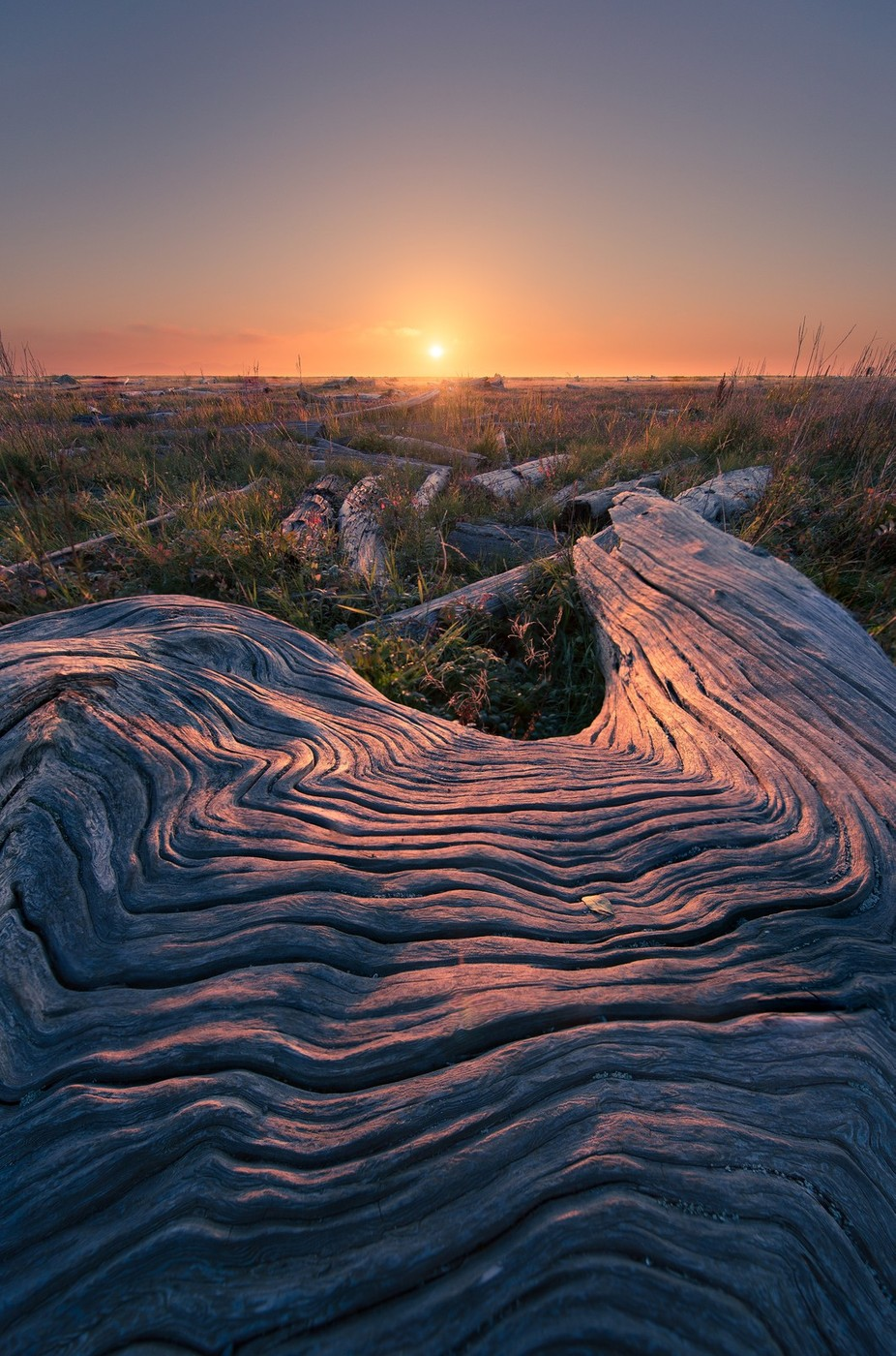 Grooves in the Bark by tristantodd