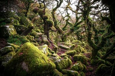 Whistman's Wood