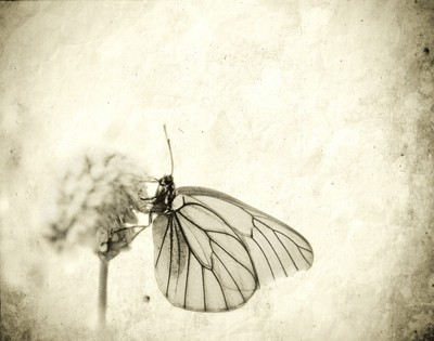 A simple Butterfly
