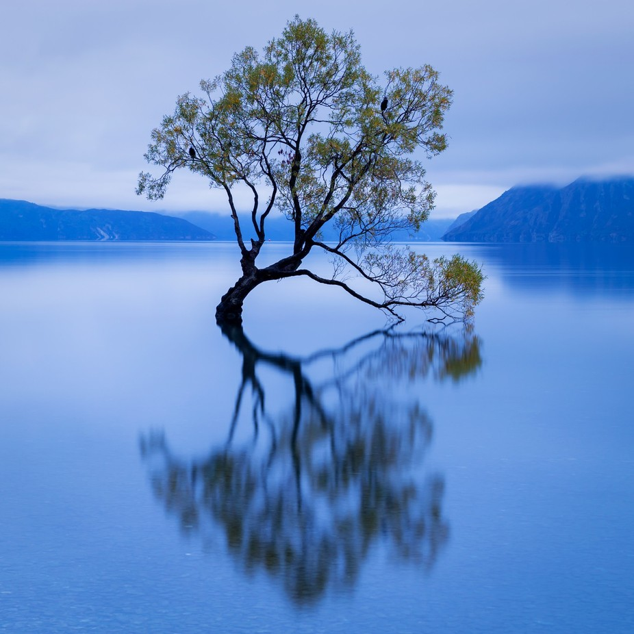 That Tree by johngregory - A World Of Blue Photo Contest