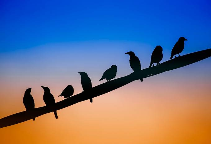 Birds by TienSangKok - Composing with Diagonals Photo Contest