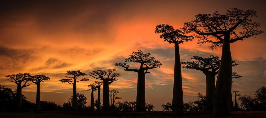 Baobab Avenue, Madagascar, Menabe