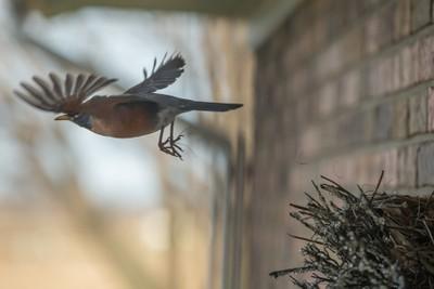 Robin's Nest 3