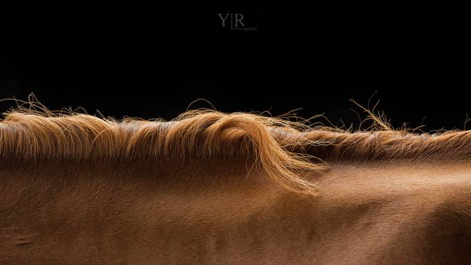 Abstract Equine Art by yrobertshaw