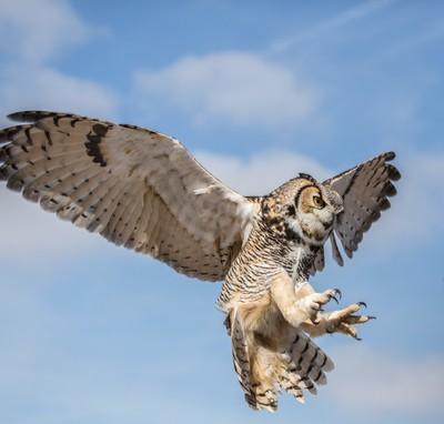 Owl attack!!