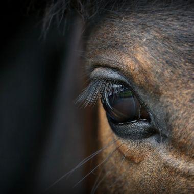 Eye of a Whisper