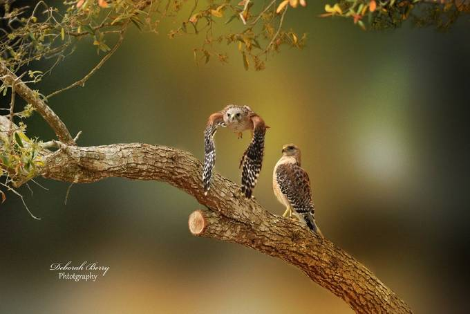 See Ya Later Baby by deborahberry - Wildlife Photo Contest 2017