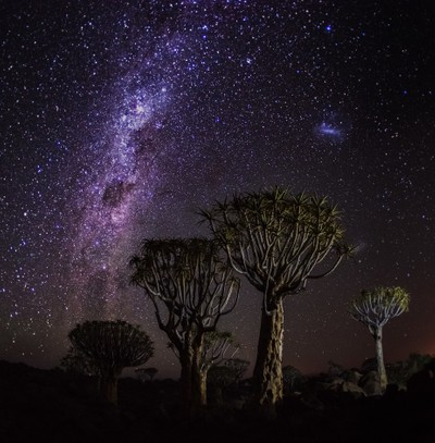 Milky way above quiver trees