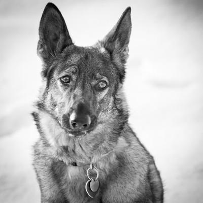 Meet Maisy!