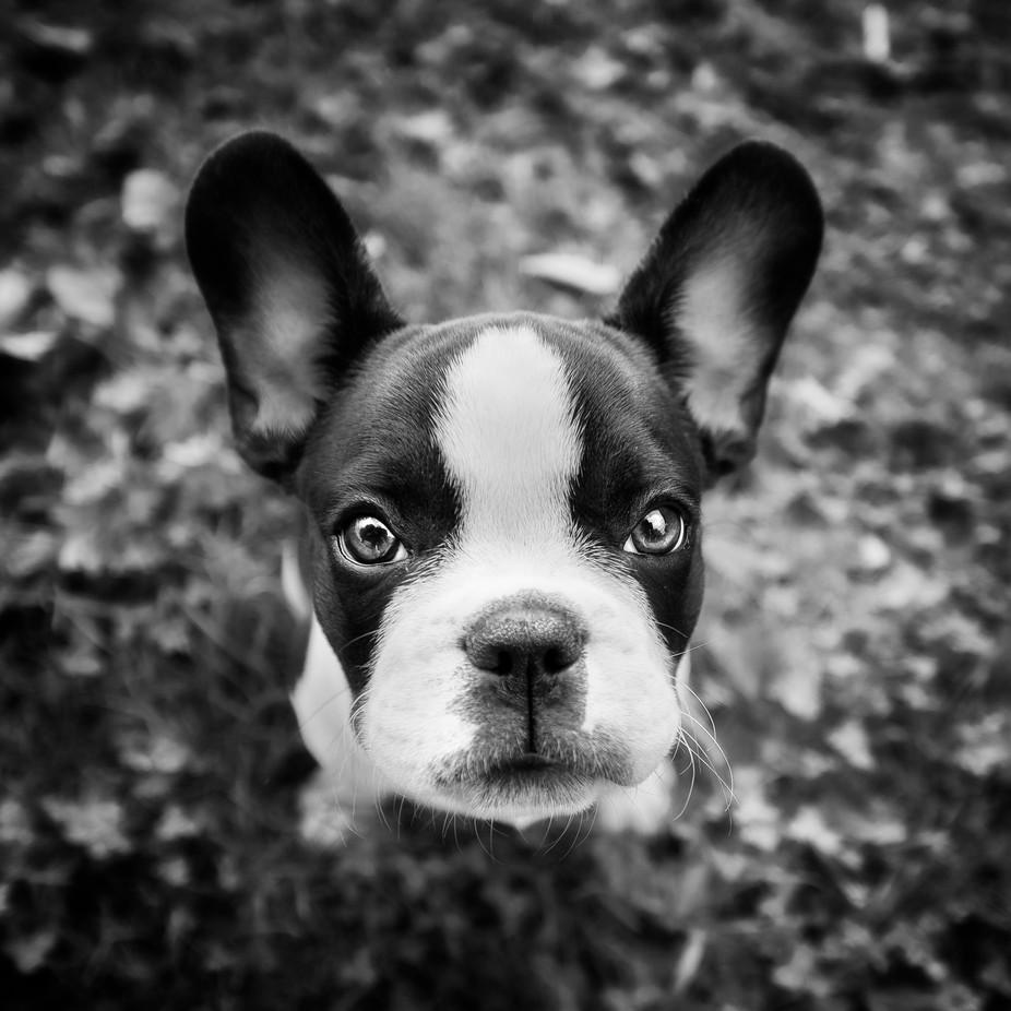 bine II by tadejturk - The Animal Eye Photo Contest vol1