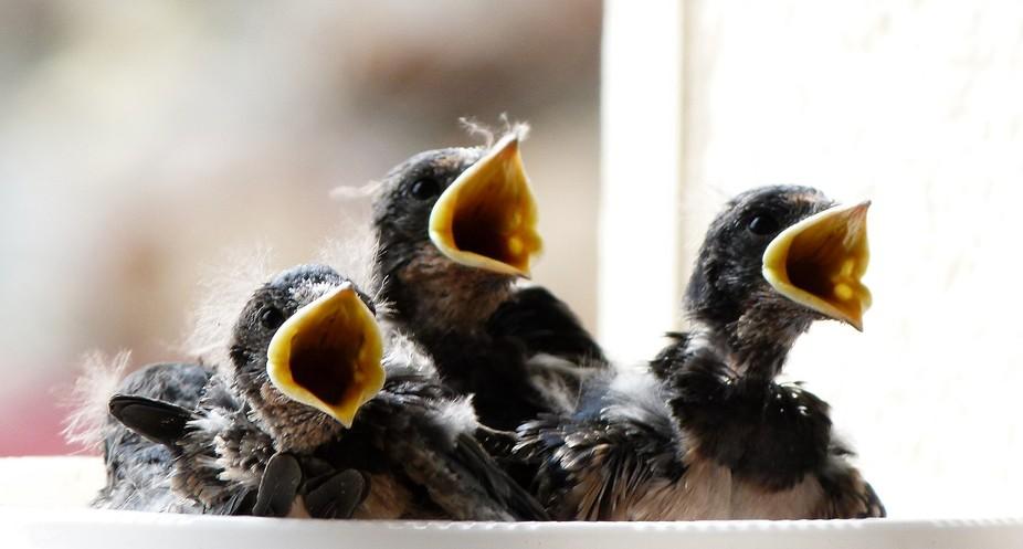 Found them chirping away
