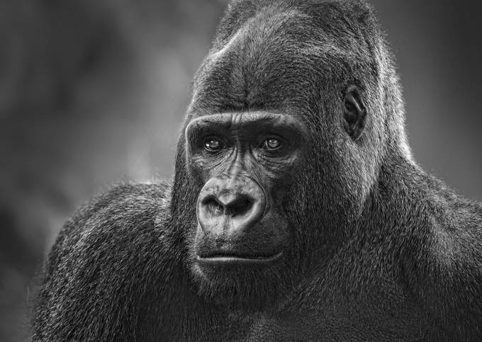 You Talkin' To Me? in B&W by fidfoto - Animals In Black And White Photo Contest