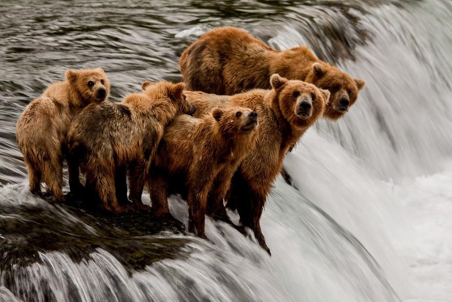 Bear family at Brooks River Falls (1 of 1)