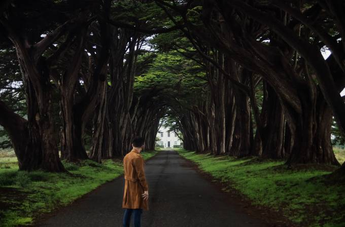 Cypress by orlandoromero
