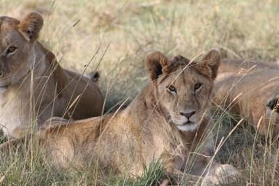 The Beautiful of Masai Mara