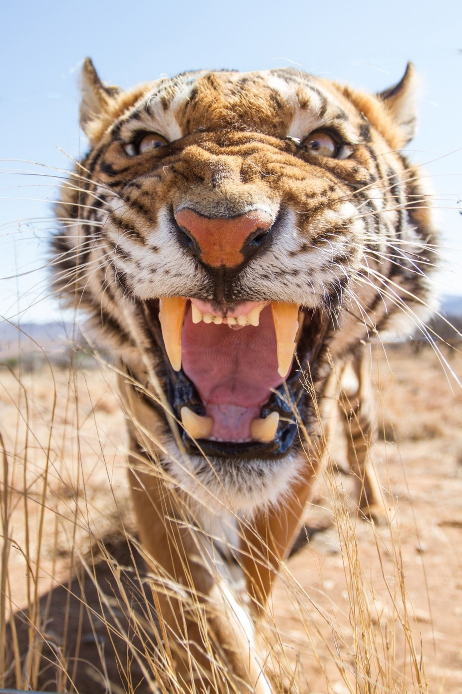 close encounter by saboytjie - Explore Africa Photo Contest