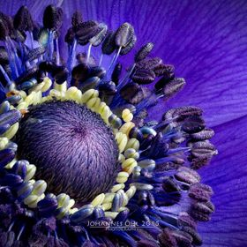 Focus stacking is showing the tiny details of an anemone.