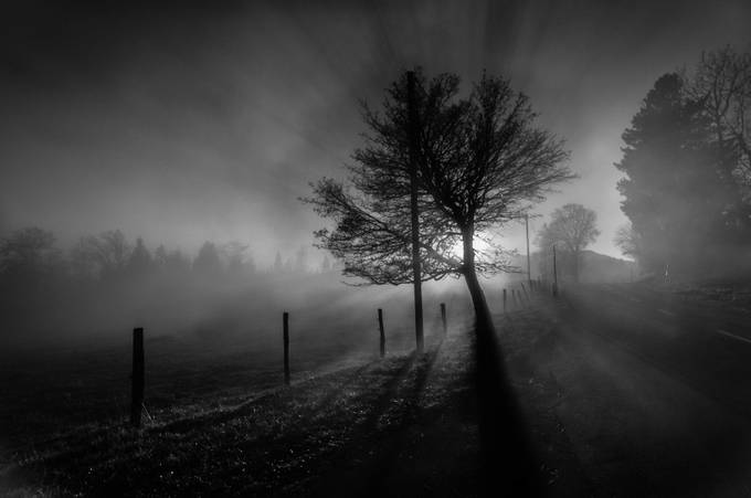 Dans son ombre. by aldoviola - Silhouettes Of Trees Photo Contest