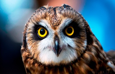 Owl be looking at you