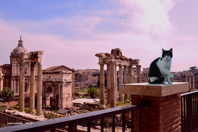 0077, Roman Forum and The Cat
