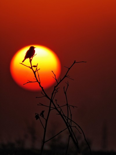 Sun is setting down behind the perched bird