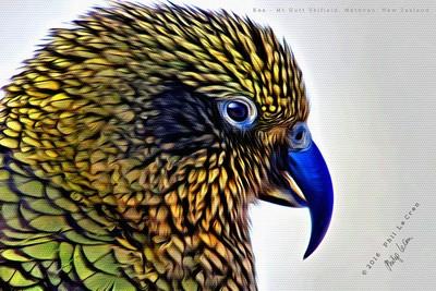 Kea Art On Canvas (1)