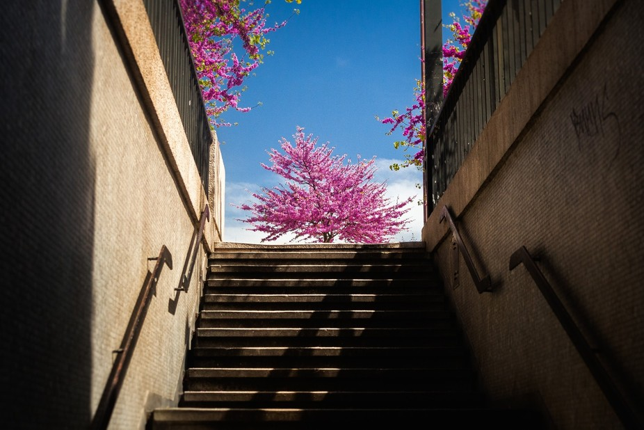Spring in Lisbon, Portugal.