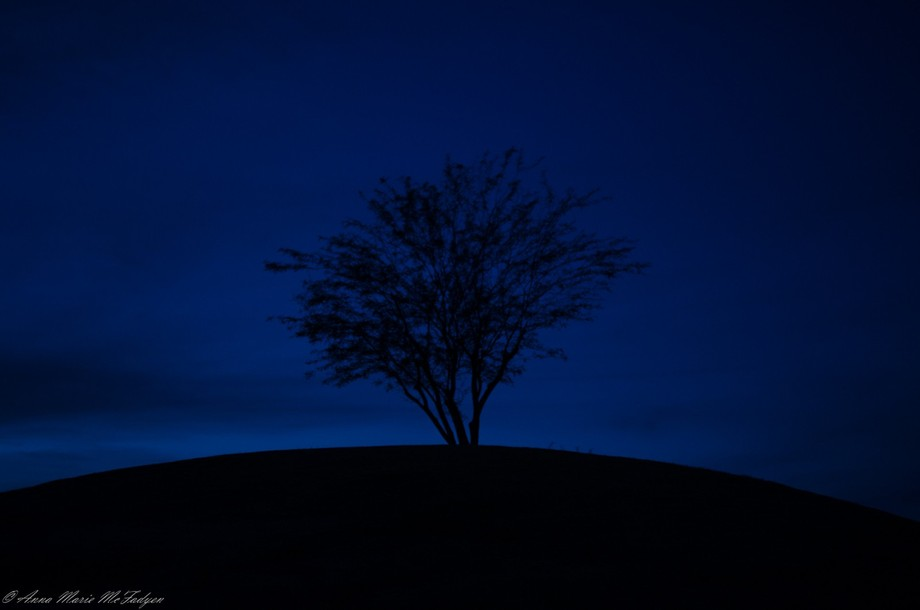 I was out walking in the evening and the light was fading quickly and there was this lone tree on...